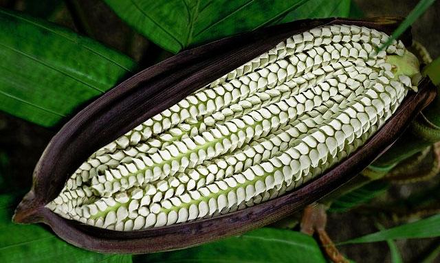 Семена - основа продукции Rain International