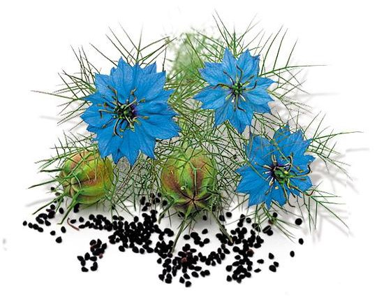 black cumin flower and seeds
