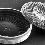 Диатомеи - источник кизельгура фуй