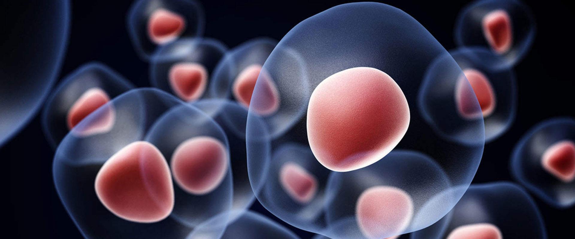 Клеточное питание: что это?