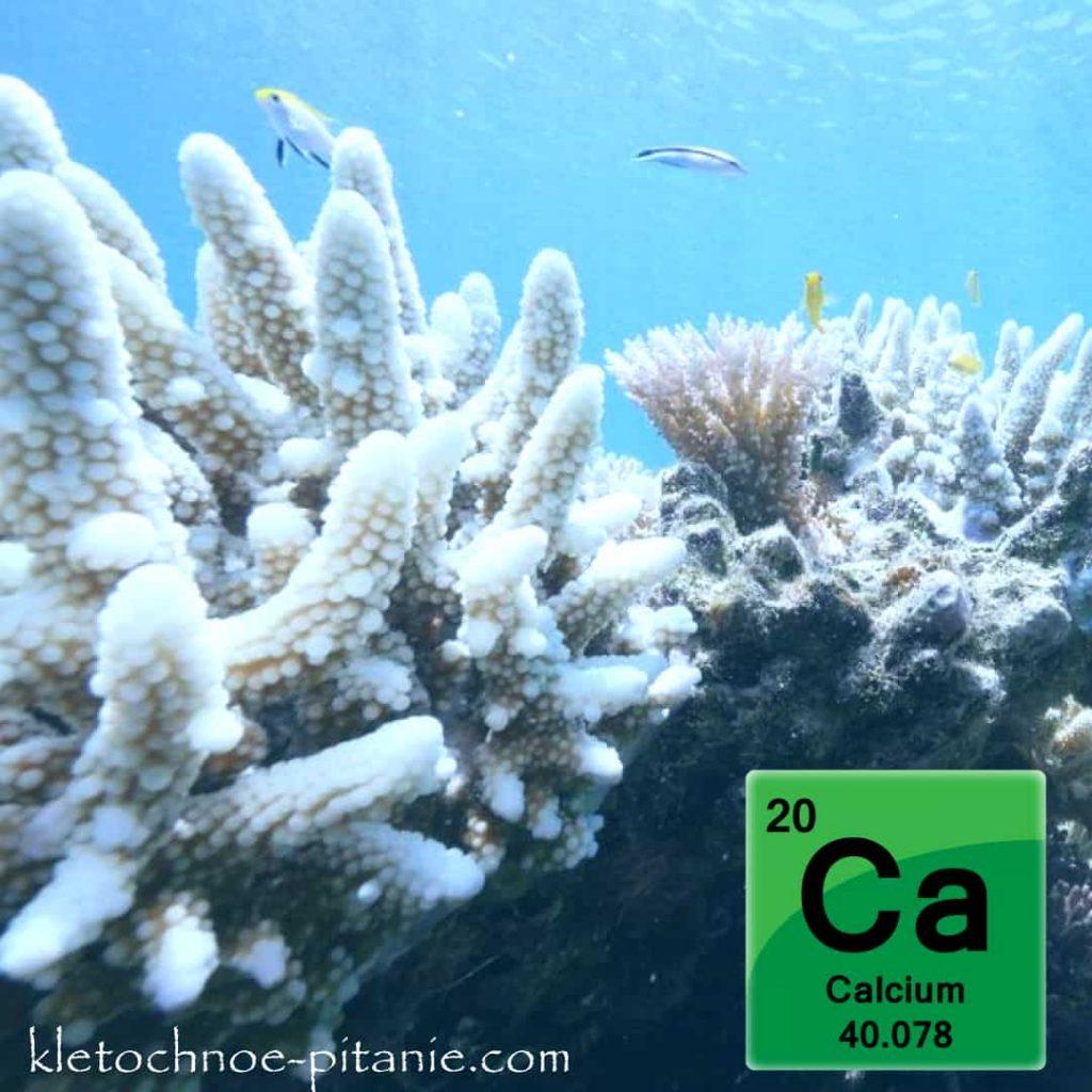 Коралловый кальций фото