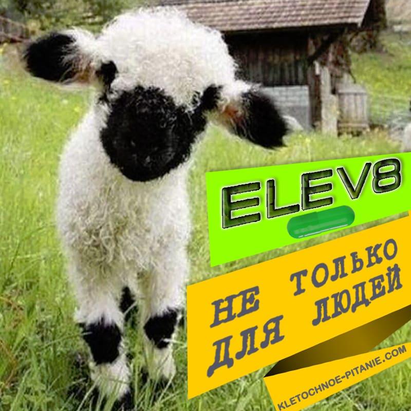 Elev8 для животных